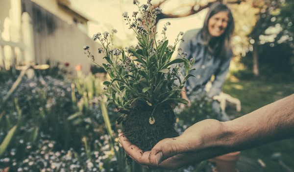 What To Plant In Your Garden And When
